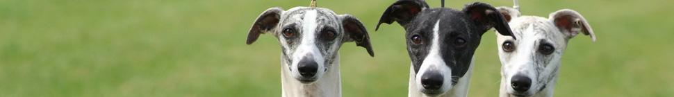 German-Whippet-Trophy 12.13 header image 1